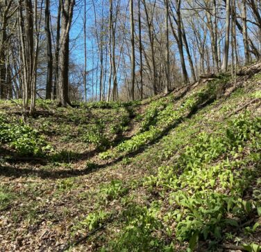 wooded valley with spring wild flowers